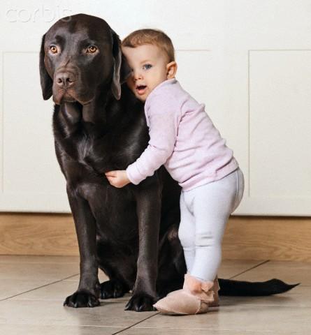 pets-bebe